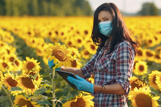 Woman farmer agronomist in gloves and face mask at sunflower field with tablet checking harvest.