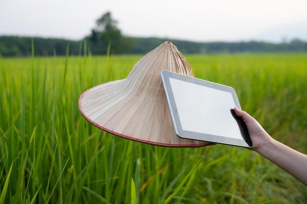 水田で緑の稲の苗にいる間、タブレットとヤシの葉の帽子を持っている女性農家の手