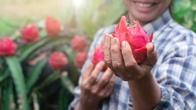 有機農場でドラゴンフルーツを喜んで保持している女性農夫。農業または栽培の概念