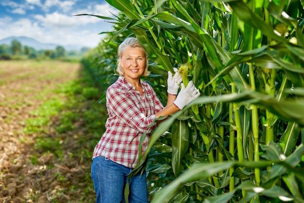 Woman farmer harvesting crop corn in field.
