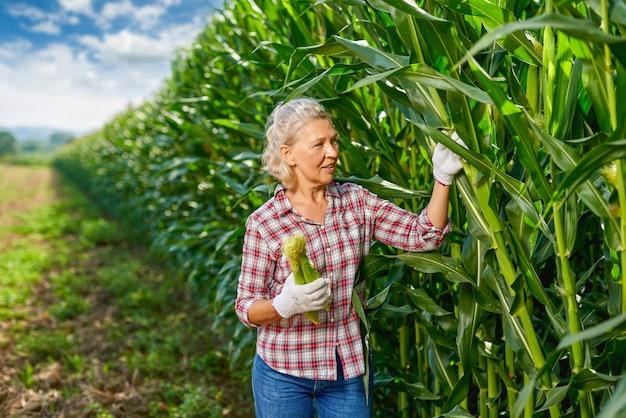 Woman farmer harvesting crop corn