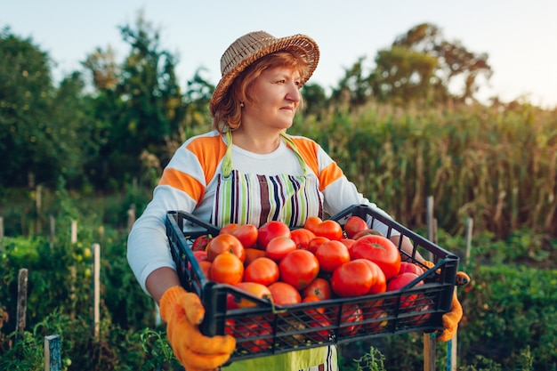 Woman farmer holding box of red tomatoes on eco farm