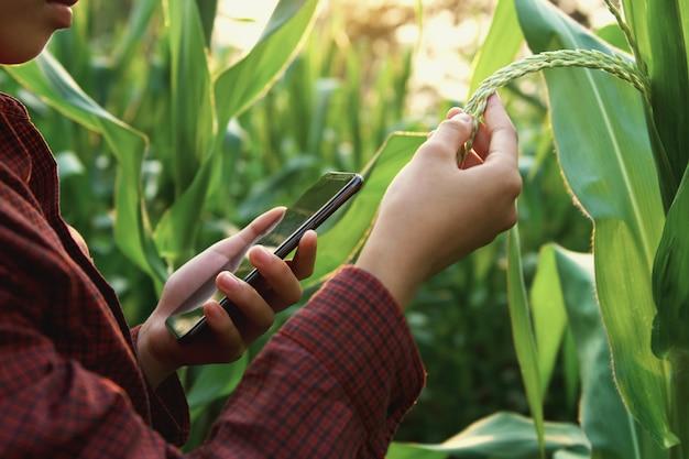 Woman farmer using technology mobile in corn field