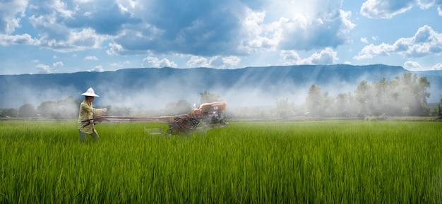 雨の中で稲を耕すためにウォーキングトラクターを使用している女性農家