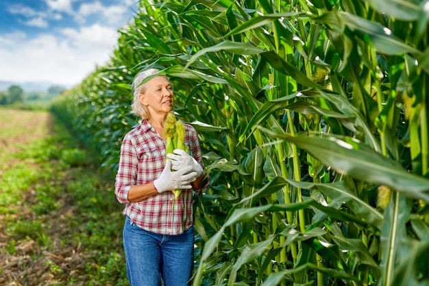 Woman farmer with a crop of maize.