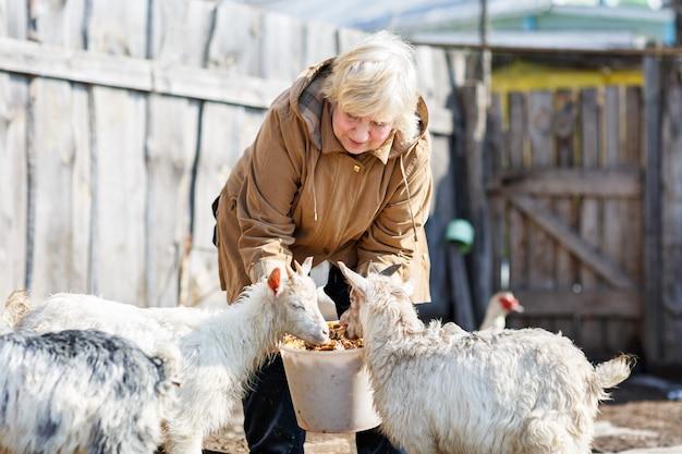バケツから小さなヤギに餌をやる女性