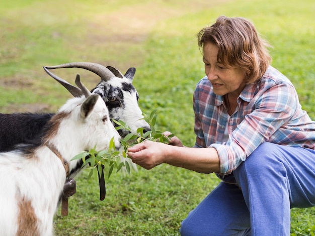いくつかのヤギに餌をやる女