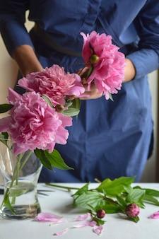 여자, 플로리스트는 꽃병에 모란을 넣었습니다. 항아리에 아름 다운 핑크 pions 모란입니다. 확대.