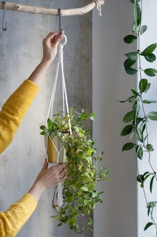 Woman freelancer holding macrame plant hanger with houseplant tradescantia over grey wall