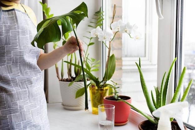 屋内植物の世話をする女性の庭師