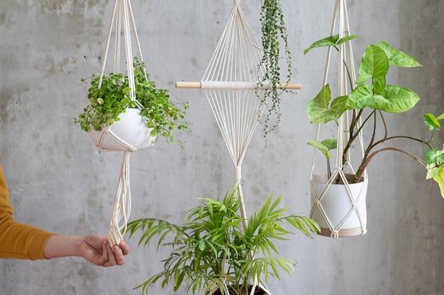 Woman gardener holding macrame plant hanger with houseplant over grey wall