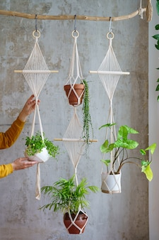 Woman gardener holding macrame plant hanger with houseplants over grey wall at home