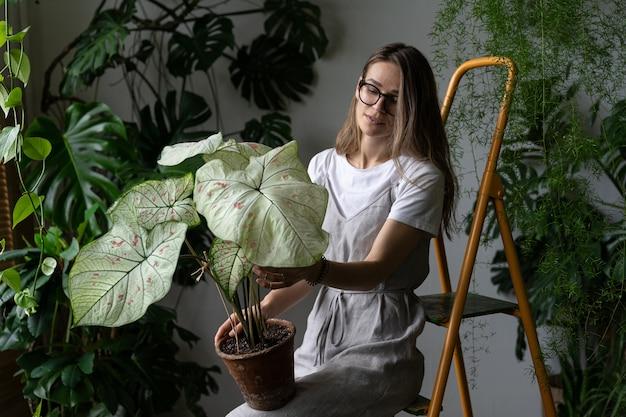 Женщина-садовник в сером льняном платье держит комнатное растение каладиум с большими белыми листьями