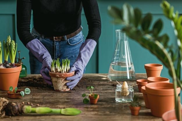 여성 정원사는 아름다운 식물, 선인장, 다육 식물을 세라믹 냄비에 이식하고 집 정원에 대한 그녀의 개념을 위해 복고풍 나무 테이블에 집 꽃을 돌보고 있습니다.