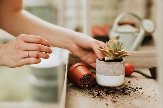Женщина-садовник, посадка суккулентов в горшок