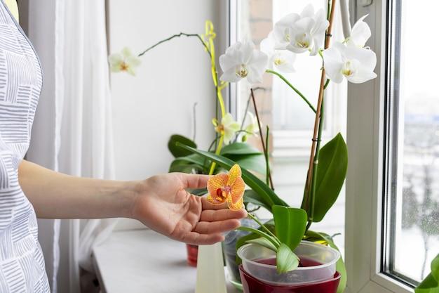 屋内植物の世話をする女性の庭師 Premium写真