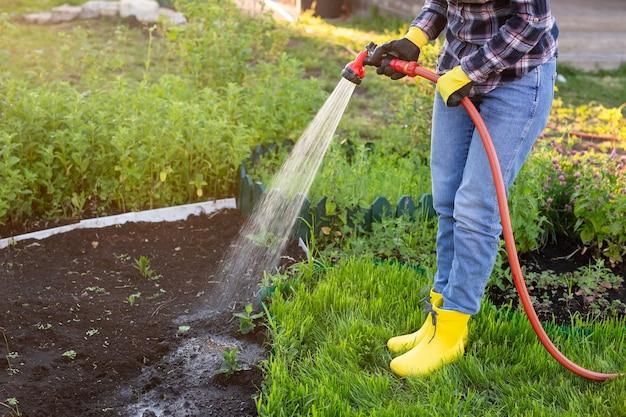 화창한 따뜻한 봄 날에 호스로 그녀의 정원 침대를 급수하는 여자 정원사. 새 시즌 식물 관리 및 심기 개념