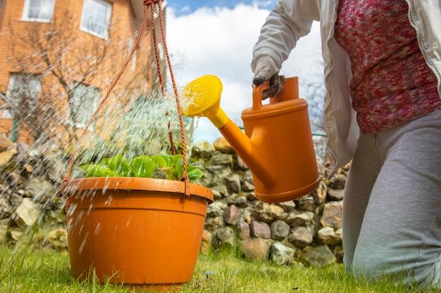 여자 정원사는 정원에 있는 물을 깡통에서 꽃 냄비에 물을 줍니다. 얼굴이 없다. 선택적 초점