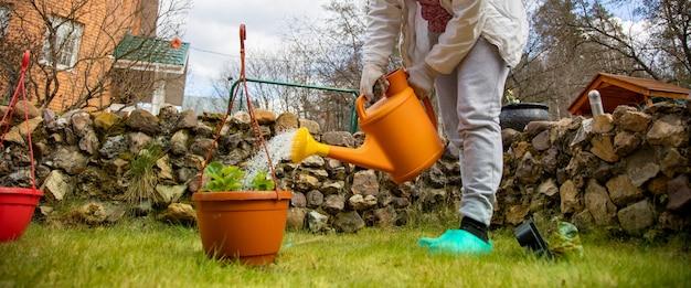 여자 정원사는 얼굴이 없는 정원에 있는 물뿌리개에서 꽃 냄비에 물을 준다