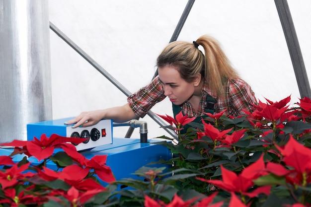 Женщина-садовник работает с отопительным оборудованием в теплице, где растут красные цветы пуансеттии