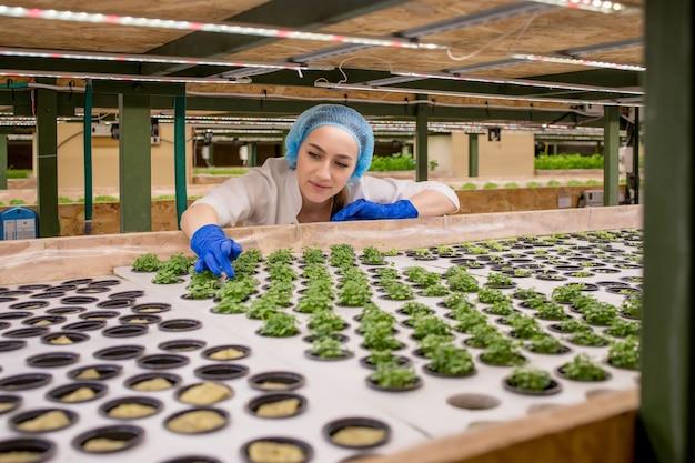 여성 정원사는 수경 농장에서 녹지를 유지하고 고객에게 전달되기 전에 성장 녹지를 꼼꼼하게 관찰합니다.