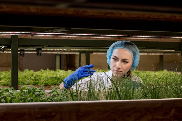 Woman gardeners keep greenery at hydroponic farm and observing growth greenery meticulously before delivered to the customer.