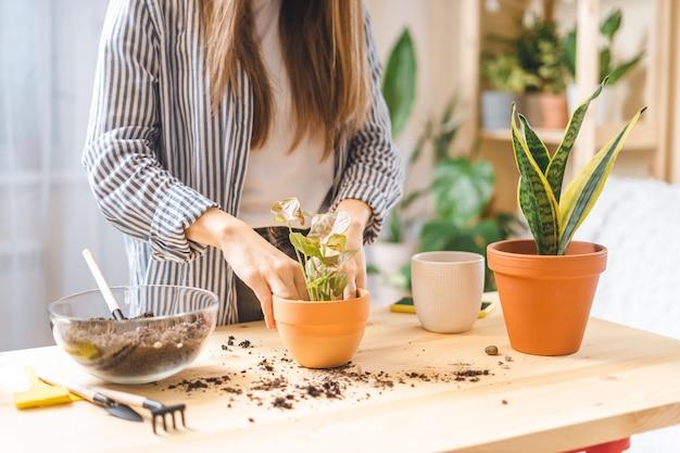 Женщина-садовник растение в горшке