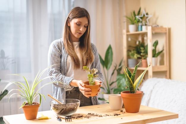 Женщина-садовник ухаживает и пересаживает растение в новый керамический горшок на деревянном столе. домашнее озеленение, любовь к комнатным растениям, фриланс. весеннее время. стильный интерьер с множеством растений.