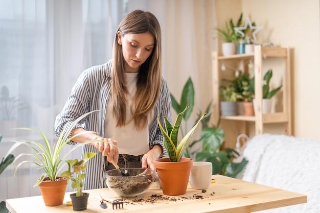 世話をして移植している女性の庭師は、木製のテーブルの新しいセラミックポットに植物を植えます。