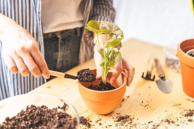 Женщина-садовник ухаживает и пересаживает растение в новый белый горшок на деревянном столе.