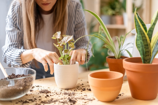 世話をして移植している女性の庭師は、木製のテーブルの新しい白い鉢に植物を植えます。