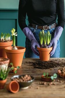 오래 된 나무 테이블에 세라믹 냄비에 식물을 이식하는 여자 정원사. 가정 정원의 개념입니다.