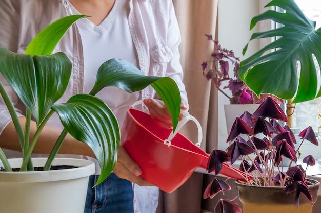 陶磁器の鍋で植物に水をまく女性庭師
