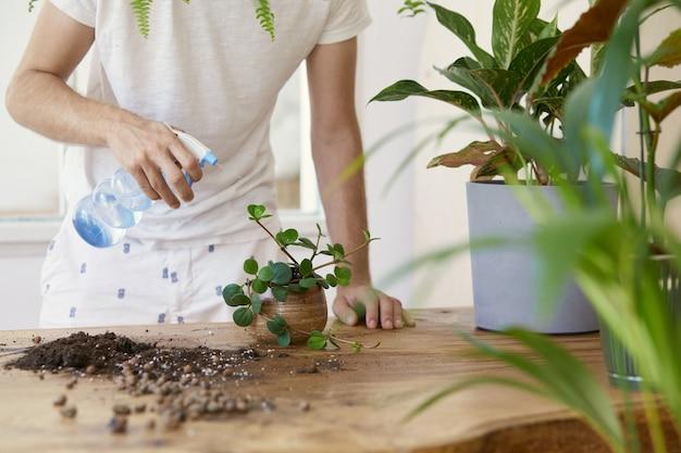 白い木製のテーブルの上の大理石のセラミックポットで植物に水をまく女性の庭師。ホームガーデンのコンセプト。春の時間。植物がたくさんあるスタイリッシュなインテリア。観葉植物の世話をします。テンプレート。