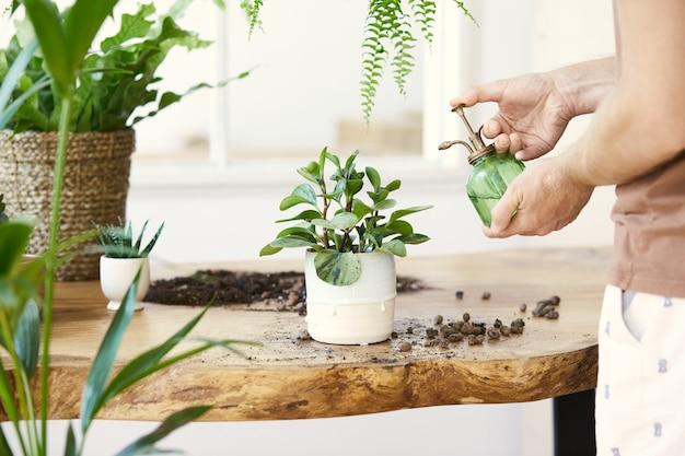 흰색 나무 테이블에 대리석 세라믹 냄비에 식물을 급수하는 여자 정원사.