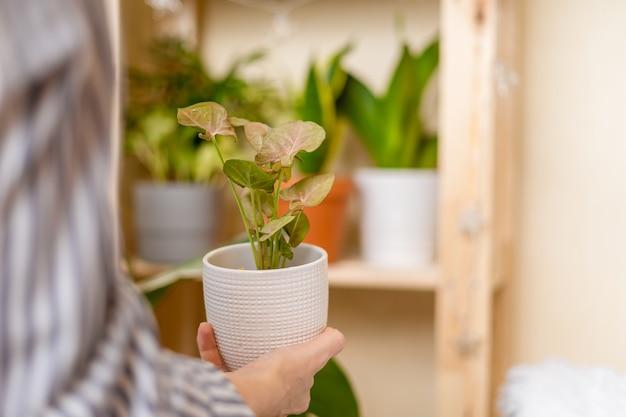 Женщина-садовник с растением