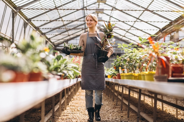Woman gardner looking after plants in a greenhouse