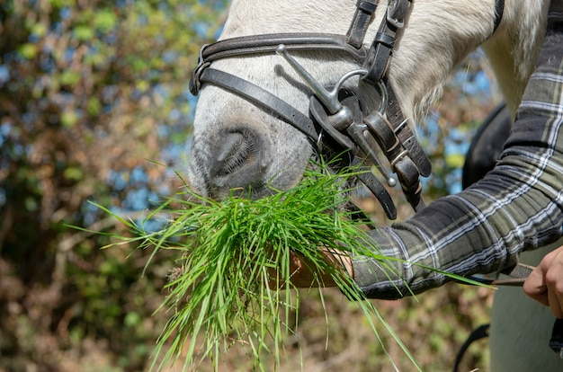 Woman giving grass to horse