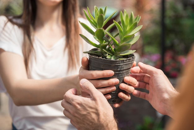 Woman giving potted plant to her client