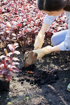 Woman growing red amaranth