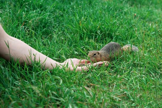 ホリネズミに餌をやる女性