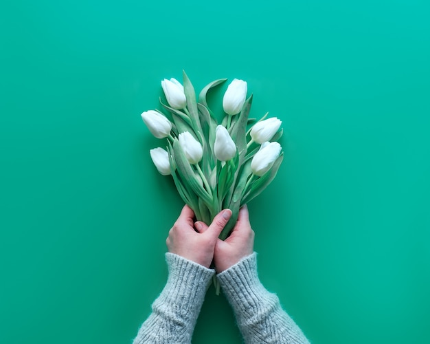 Woman hand hold bunch of white tulips on mint green table. spring flat lay, top view. mothers day, international women day march 8