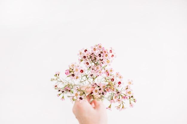 女性の手は、白い背景に野の花の枝を保持します。フラットレイ、トップビュー