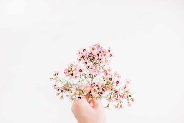 Woman hand hold wildflowers branch on white background. flat lay, top view