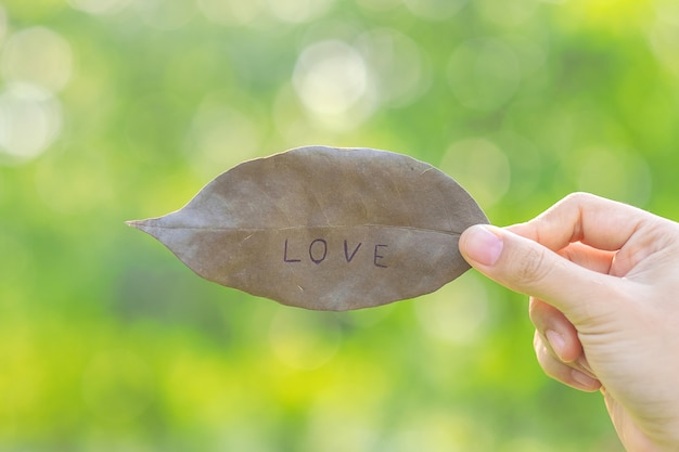 Woman hand holding dried leaf with love text on green natural background
