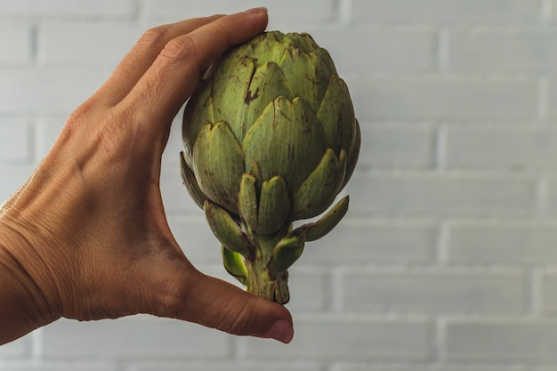 Woman hand holding a raw french artichoke against a white background. point of view background