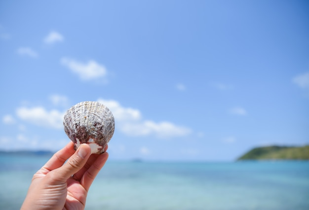 Woman hand holding a shell on the beach with blurred sea and blue sky background. summer day concept.