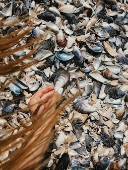 石を持っている女性の手。色とりどりの貝殻黒海ルーマニア。夏の背景