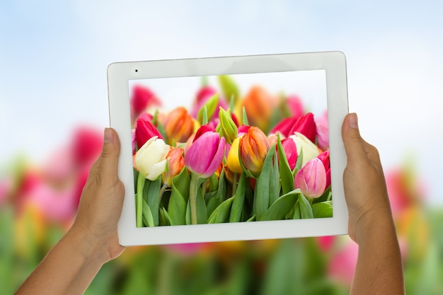봄 꽃 배경에 태블릿을 들고 여자 손