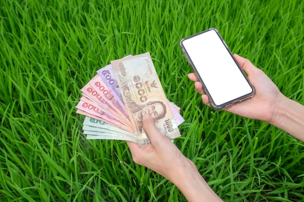 Woman hand holding thai banknotes and smartphone blank screen with green rice wallat farm